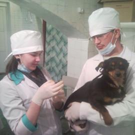 Студенти-ветеринари майбутнім абітурієнтам