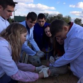 Навчальна практика з дисципліни «Анатомія і фізіологія с.-г. тварин»